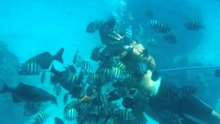 preview picture of video 'Semi Sub Shore Excursion Georgetown, Grand Cayman, Cayman Islands.'