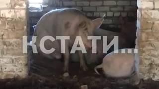 Животные голодают, а соседи страдают - фермеры-нелегалы отравили жизнь целому поселку