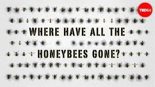 The case of the vanishing honeybees – Emma Bryce