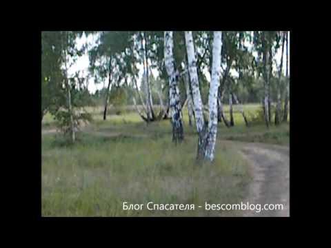 В лесу возле озера Горькое
