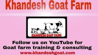 Goat and sheep farm trainning - Hài Trấn Thành - Xem hài