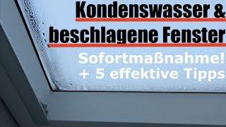Kondenswasser: Fenster innen beschlagen - was tun & wie vermeiden