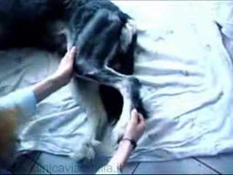 Anestesia allosteocondrosi lombare