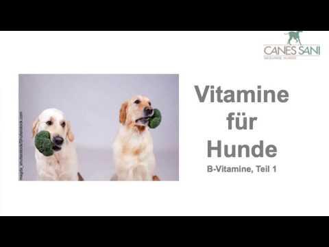 Vitamine für Hunde - B-Vitamine: Was kann passieren, wenn sie nicht ausreichen? Was tun?