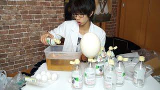 【実験】ダチョウの卵を酢にブチ込んで巨大スーパーボールを作る