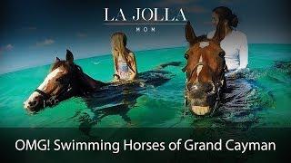 Swimming Horses of Grand Cayman