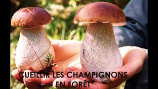 preview picture of video 'CUEILLETTE de CHAMPIGNONS en FORÊT | CÈPES | BOLETUS | FUNGUI | MORILLES'