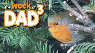 The Week of Dad³ - Dad³ Goes West! - 5th February 2018