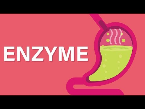 Science Lesson: What ARE Enzymes?