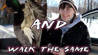 ???????? Ducks = Fatherhood | Vlog | FPV Freestyle