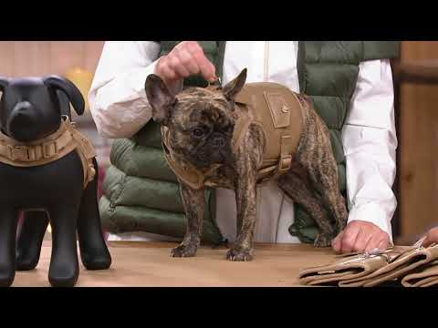 Martha Stewart Faux Leather Dog Harness Vest On QVC