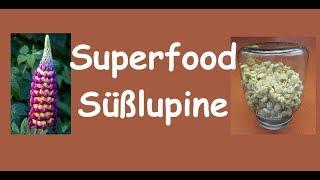 Süßlupinen-Samen : Superfood von heimischen Feldern