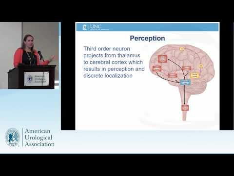 Visualizzare prostata rettale
