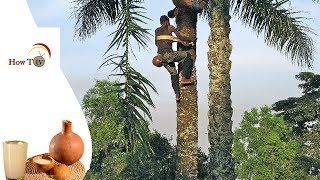 THIS VIDEO IS FOR THE LOVERS OF PALM WINE   BEST PALM WINE TAP TRICKS    DIY   HOW TO TV