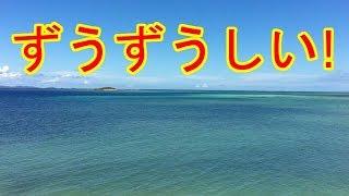 【非常識】 ハワイ旅行中に 「ビジネスクラスを変えてくれ」
