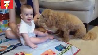 Дети и животные смешные видео для всех