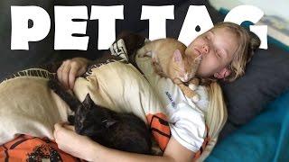 Naše koťátka | PET TAG