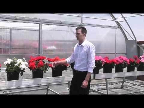See Presto Geranium At Spring Trials thumbnail