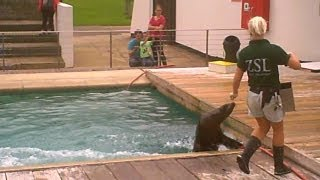 preview picture of video 'Whipsnade Zoo 4/10 - Flamingos and Sealions'