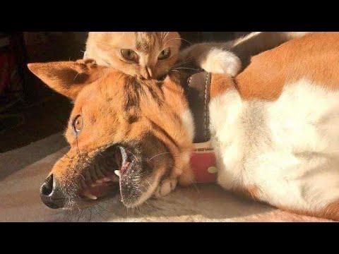 Reao de Gatos - Gatos engraados -Videos de gatos  Engraados 2021- Reaction cats funny