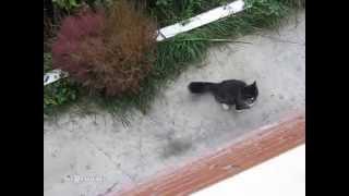 The Return of the Cat / Возвращение кота - Video Youtube