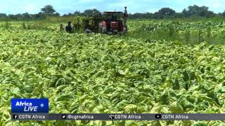 Zimbabwe Land Reforms Affecting Lives 17 Years After