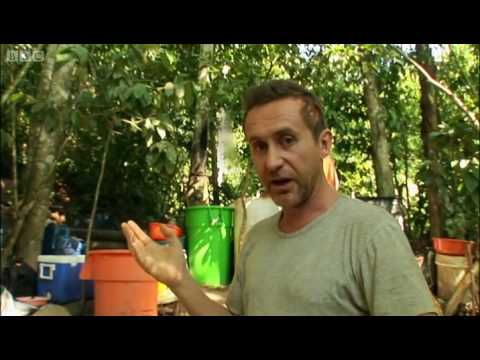 Making cocaine in the Amazon - Bruce Parry - BBC