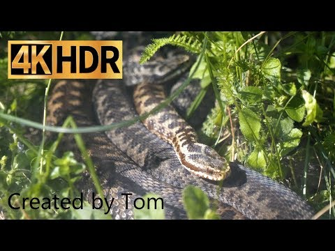 4k HDR Terrarium Stein (4K HDR) shooted in 400mbit/s with GH5 Panasonic