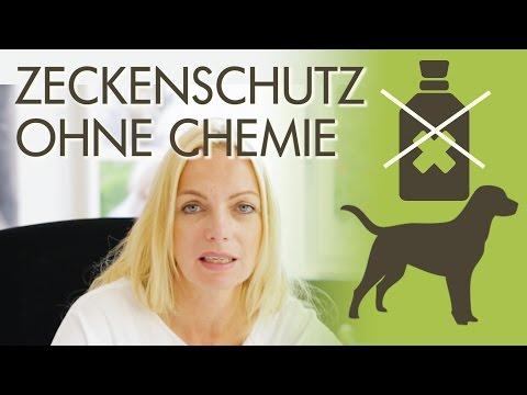Zeckenschutz ohne Chemie - Welche Möglichkeiten gibt es?