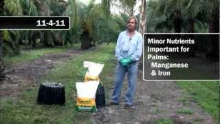 Recommended Fertilizers for Palms
