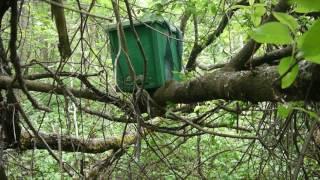 Где устанавливать ловушки для ловли роев в ловушкина
