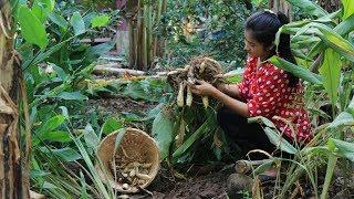 Digging arrowroot behind my home - Easy & Simple Arrowroot Recipe prepare by countryside life TV.