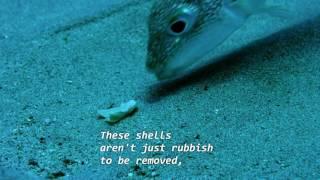 Die besten 100 Videos Unterwasser-Kunstwerk von Kugelfisch - Puffer Fish Art