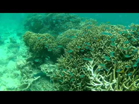 Snorkeling Menjangan island (near Bali) has one of the best-preserved coral reefs in the area