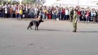 Militärhundestaffel - 26.10.2006