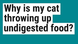 Why is my cat throwing up undigested food?