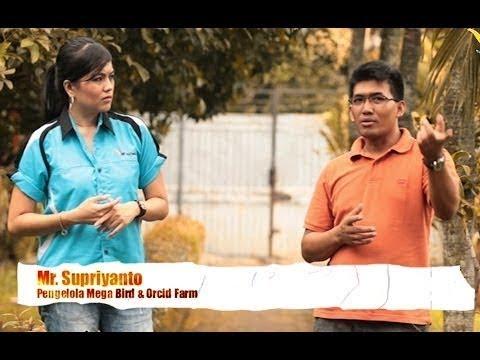 Video KISAH SUKSES : Penangkaran Burung Terbesar Indonesia -  Mega Bird & Orchid Farm (MBOF) Bogor