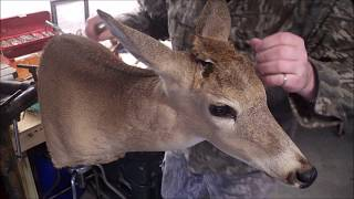 How To Add Your Antlers To A Deer Head