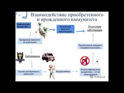 Экспресс анализ крови на гепатит новосибирск