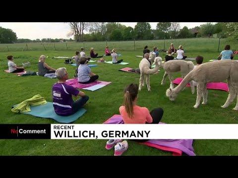 العرب اليوم - شاهد: أجواء ساحرة لممارسة اليوغا في الحياة البرية في ألمانيا