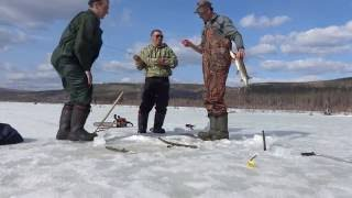 Форум фион отчеты о рыбалке