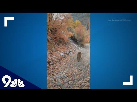 ΗΠΑ: Λιοντάρι βουνού επιτέθηκε σε πεζοπόρο