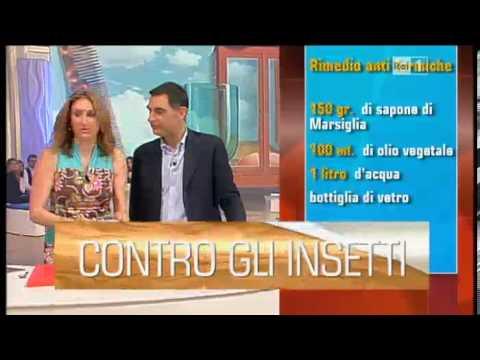 Autoproduzione Insetticida repellenti zanzare e formiche Lucia Cuffaro Unomattina in Famiglia Rai 1