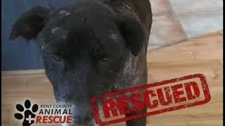 ANIMAL RESCUE SEASON 1 - EPISODE 6 ( Kent County Animal Rescue )