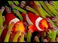 Download Youtube: Clown Fish - My animal friends - Animals Documentary -Kids educational Videos