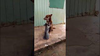 animales un masaje delicado