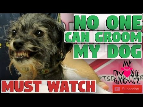 No One Can Groom My Dog