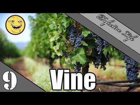 Vine: Vysvědčení