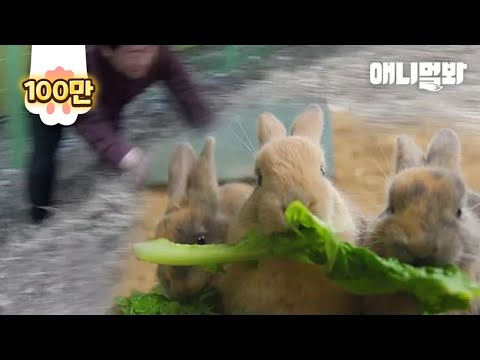 , title : '이때까지는 아무도 예상 못했던 어미토끼의 운명 l At This Point, No One Expected How A Mom Rabbit's Fate Would Unfold'