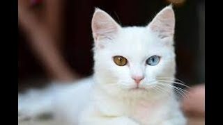 Cat videos funny for kids Cats are so funny